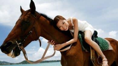 Photo of 3 יתרונות בקורס רכיבה על סוסים